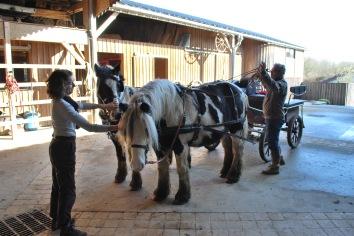 Angéla et Philippe avec leur chevaux