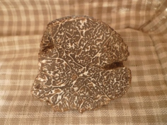Une lamelle de truffe