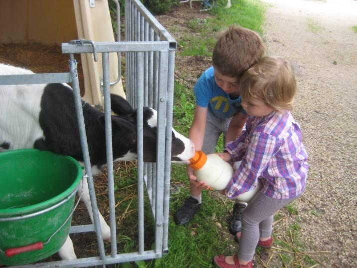 Des enfants nourrissant le petit veau