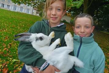 Marotte la lapine adore se faire câliner