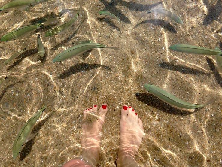 24 08 ma t et les petits poissons blog officiel for Gites de france des bouches du rhone