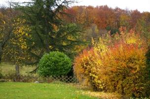 Notre jardin en automne