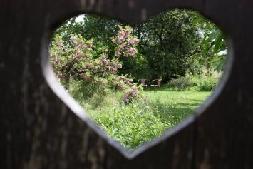 Coeur jardin
