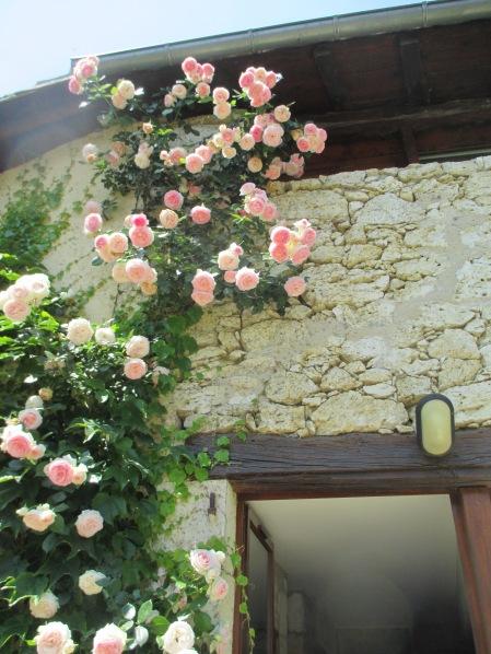Quelques fleurs du gîte