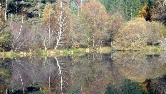 Belle balade en bord de lac dans le Cantal