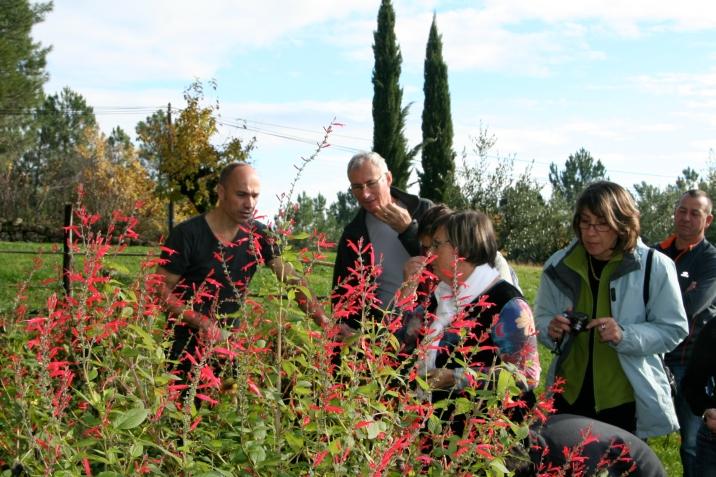 Cueillette et cuisine des plantes sauvages avec les hôtes