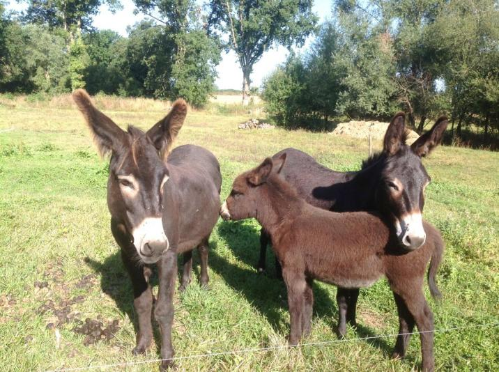 Randonnée/rencontre avec les ânes