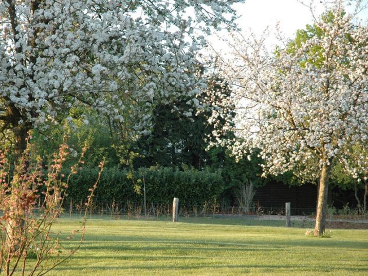 Les vergers en fleurs