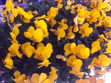 Fleurs de printemps ...