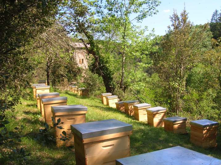 Les hôtes ont la possibilité de visiter les ruches en compagnie de Frédérique.