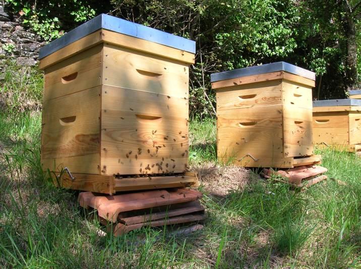 Cap' ou pas cap' d'ouvrir les ruches ?