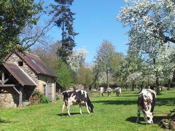 L'Orne, terre d'élevage et de vergers